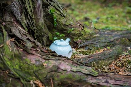 teapots (10 of 11)