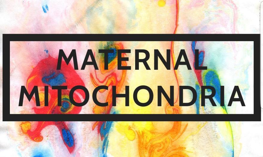 Maternal Mitochondria